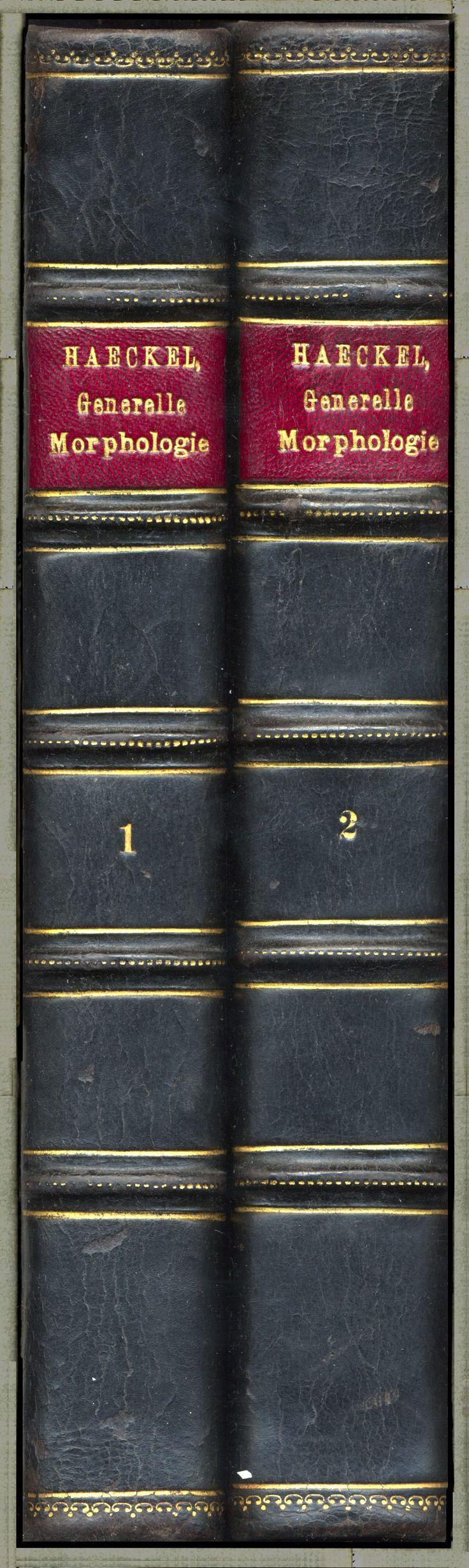 Ernst Haeckel Generelle Morphologie der Organismen 1866