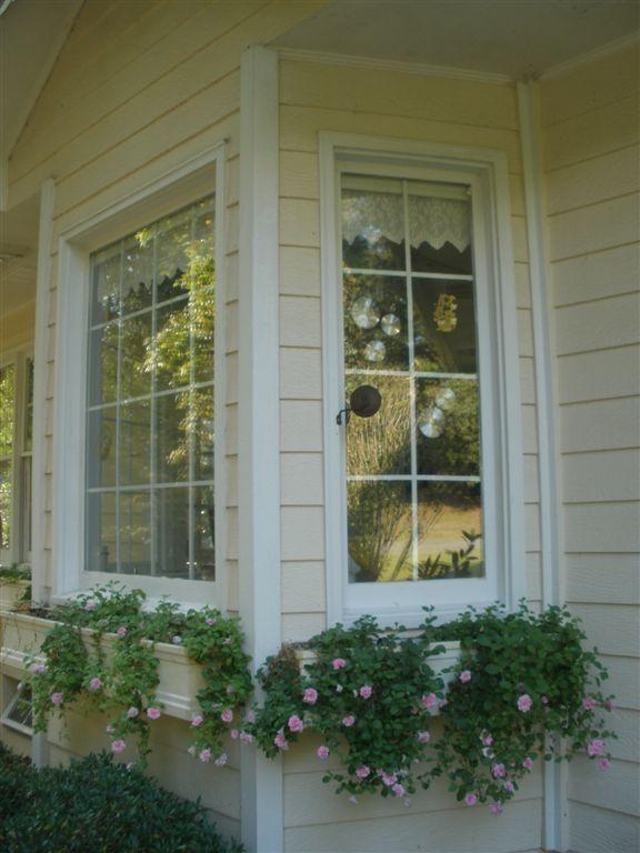 {Our Fiberglass Window Boxes & Double Cascade Pink Petunias}
