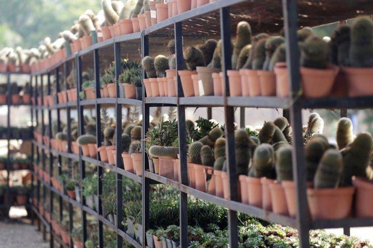 www.gardendesignschool.co.za