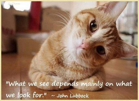 """""""What we see depends mainly on what we look for."""" SIR John Lubbock"""