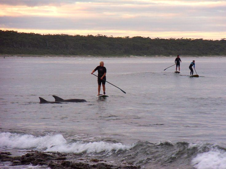 Dolphins in Jervis Bay | SUP Jervis Bay  Photo by @jbsup