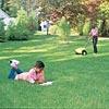 Organic lawn fertilizer