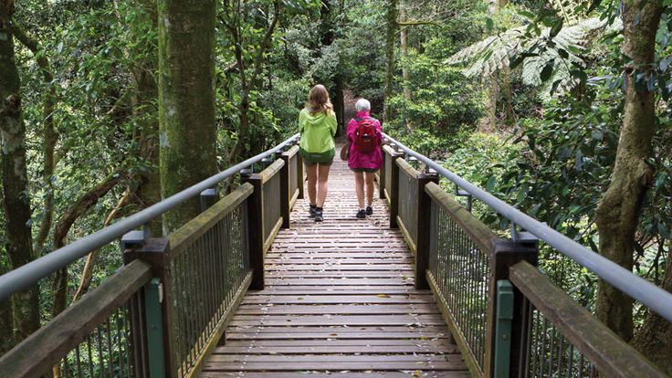 Wonga walk, Dorrigo NP inland from Coffs Harbour is rated as one of Australia's best short walks.