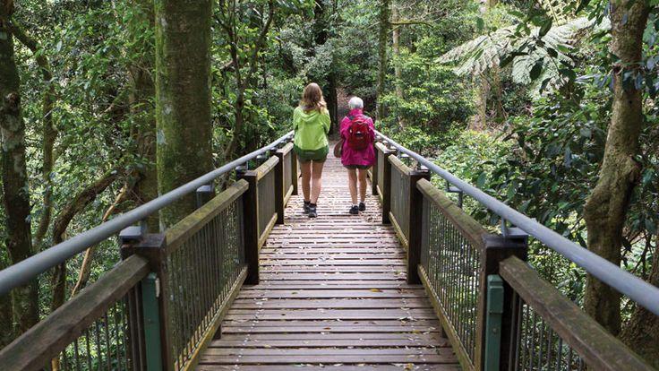 Wonga walk, Dorrigo NP inland from Coffs Harbour is rated as one of Australia's best short walks.