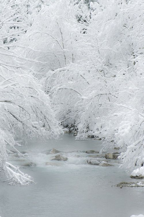 Softness of Winter .. ice storm over a tree... trees laden with snow...