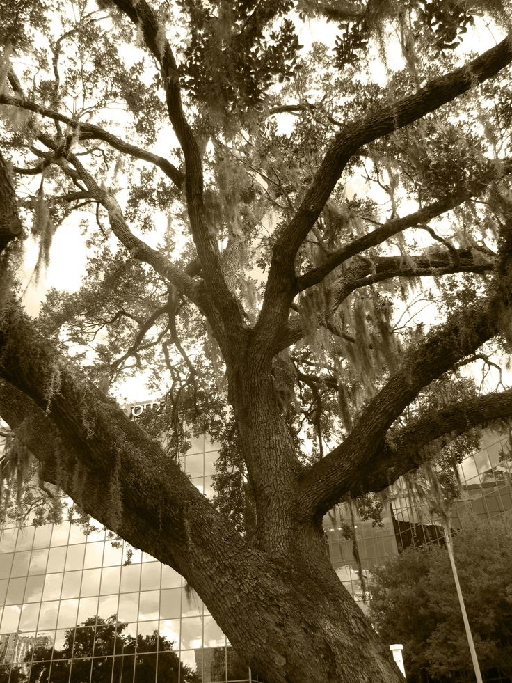 Random tree in Orlando, Florida