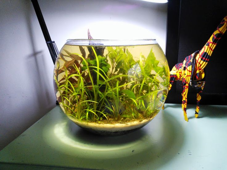16 best planted tank images on pinterest fish tanks for Fish bowl heater