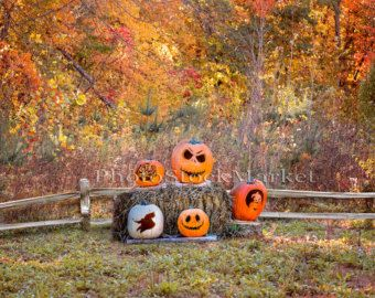 halloween backdrop fall backdrop jack o lantern carved pumpkins hay - Halloween Backdrop