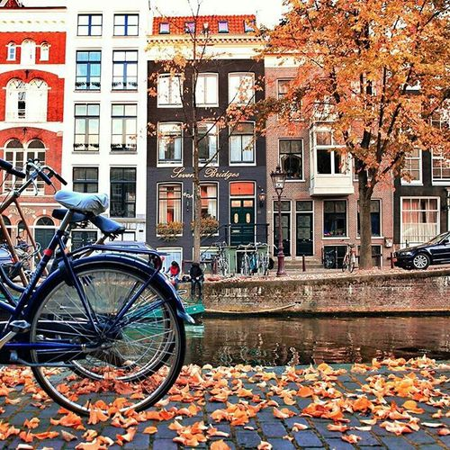 Autumn + Bicycles + Amsterdam = Favourite things