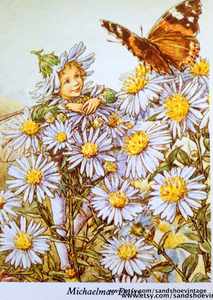 1930s Michaelmas DAISY FAIRY Cicely Mary by sandshoevintageprint