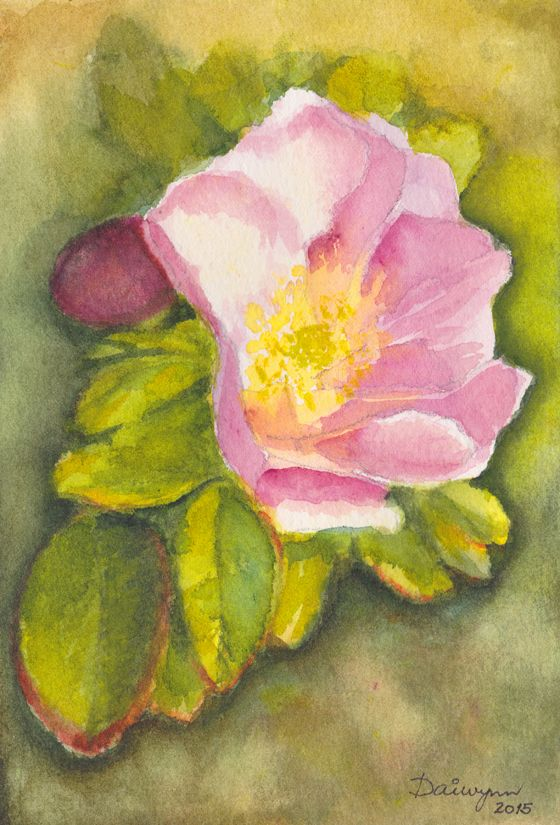 Watercolour painting by Dai Wynn of a rose blooming in a thicket behind the sand dunes of a beach in Jylland, Denmark. 19 cm high by 12.9 cm wide approximately.  Design for a greeting card.  Original is not for sale.