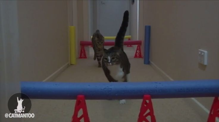 Didga and Boomer the Skateboarding Cats Race Each Other in an Adorable Obstacle Course
