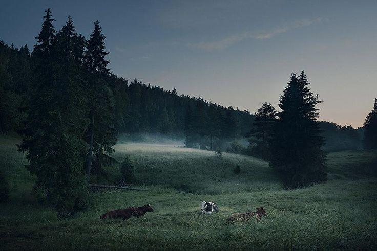 Summer night in Finland.