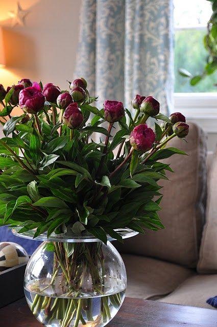 Ana Rosa ♥✫✫❤️ *•. ❁.•*❥●♆● ❁ ڿڰۣ❁ La-la-la Bonne vie ♡❃∘✤ ॐ♥⭐▾๑ ♡༺✿ ♡·✳︎·❀‿ ❀♥❃ ~*~ TUE May 3rd, 2016 ✨ ✤ॐ ✧⚜✧ ❦♥⭐♢∘❃♦♡❊ ~*~ Have a Nice Day ❊ღ༺ ✿♡♥♫~*~ ♪ ♥❁●♆●✫✫ ஜℓvஜ