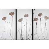 Found it at Temple & Webster - 3 Piece Poppies Abstract Canvas Painting in Brown Neutral
