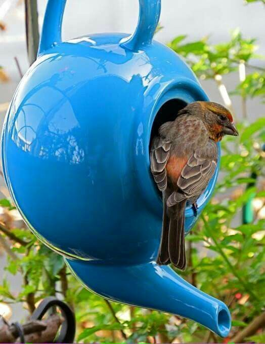 Tea pots for bird houses. Great idea! (Cover the hole on both ends of the pouring spout for safety reasons.)
