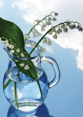 Lilly of the Valley #postcards