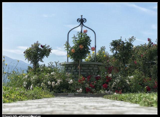 Pozzo - photographic processing (312) - elaborazione fotografica di un pozzo in pietra circondato da rose sulle montagne piemontesi ...