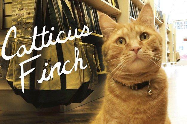 cat litter on sale near me