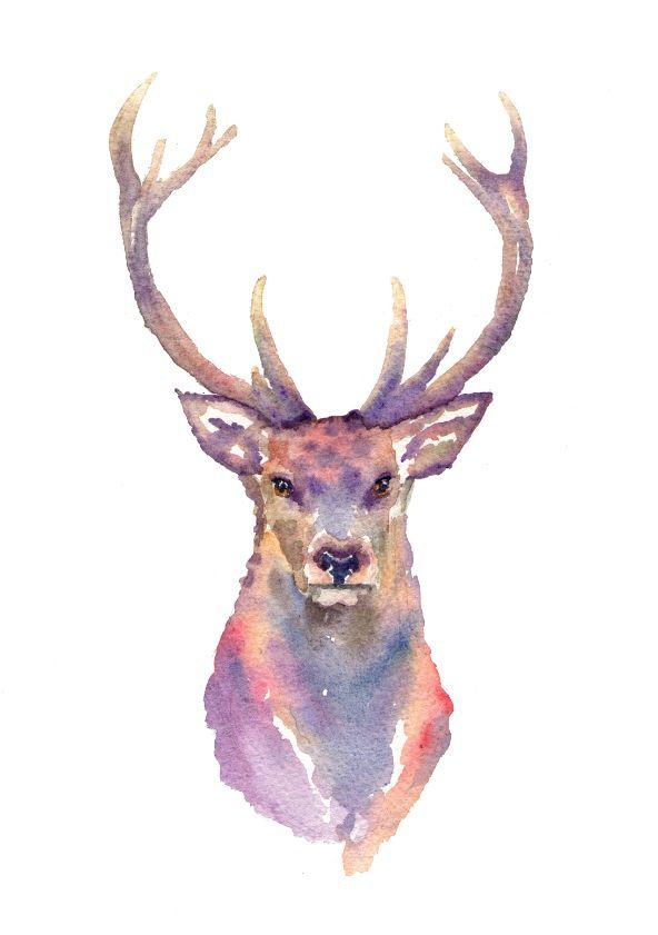 Stag in watercolour