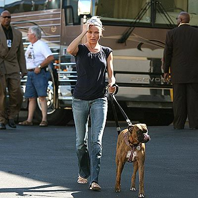 Celebrity Boxer Dog Owners - aboutboxerdogs.com