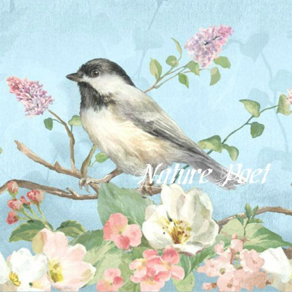 Sparrow and Blossoms Reproduction Art Downloadable от naturepoet