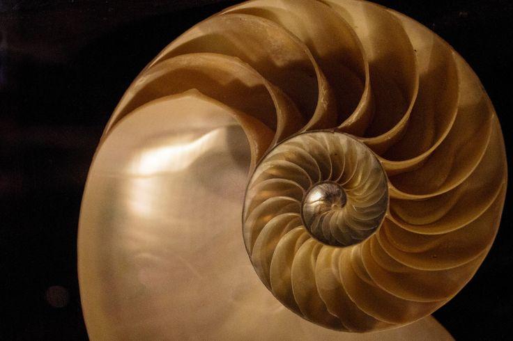 Shell at St. Malo