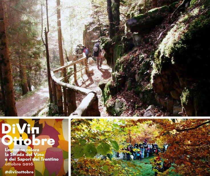 """Domenica 23 ottobre ad Alta Valle avrà luogo il trekking naturalistico """"i colori del bosco"""" perfetto per chi ha voglia di passare una domenica divertente con la propria famiglia! Maggiori info su: http://bit.ly/coloribosco  #family #trentino #autunno #bosco"""