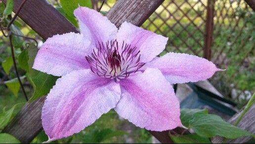 Jaki to kwiat