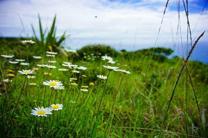 Margaritas blancas y amarillas por todos lados en Cape Reinga.    Cape Reinga Northland New Zealand    Todas las fotos son tomadas por mí excepto en las muy raras ocasiones en las que cito al fotógrafo en la descripción. Ninguna tiene photoshop o post-procesado solo a veces agrego algún filtro de Instagram.    No te pierdas ningún post: Activa las notificaciones desde el menú de mi perfil!    Facebook : http://bit.ly/2ekAKBd Instagram : http://bit.ly/2dkzLiC Twitter : http://bit.ly/2ej1GQF…
