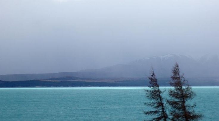wind blows trees on the side of lake tekapo, a stormy day in new zealand - free stock photo from www.freeimages.co.uk
