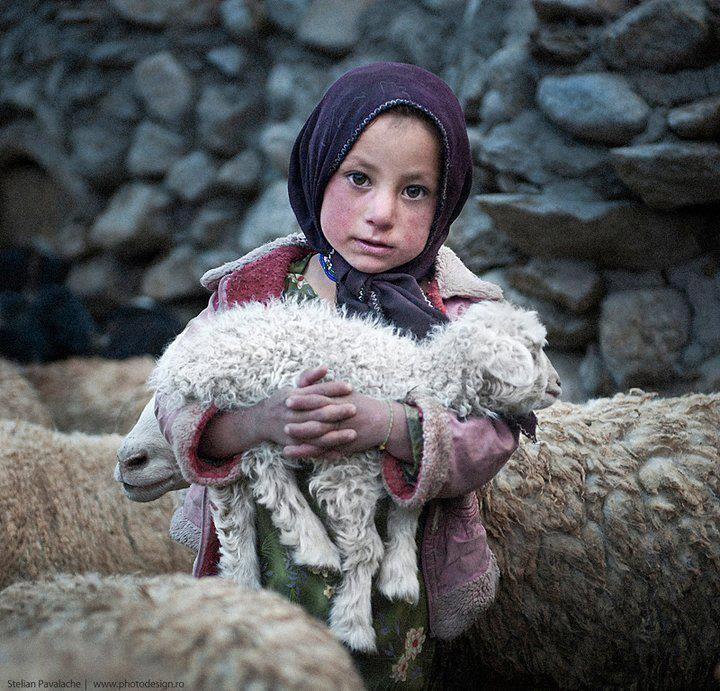 ...had a little lamb - Pakistan