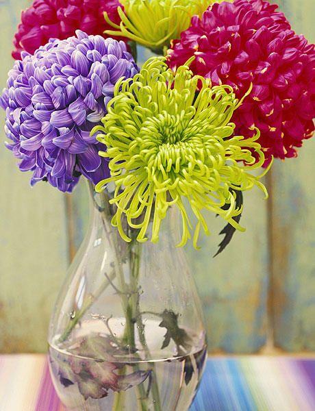 #Plantas: #crisantemos