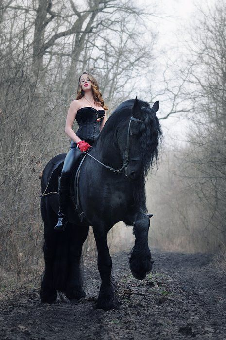 imgur needs more friesians. they are majestic as fuck. - Imgur