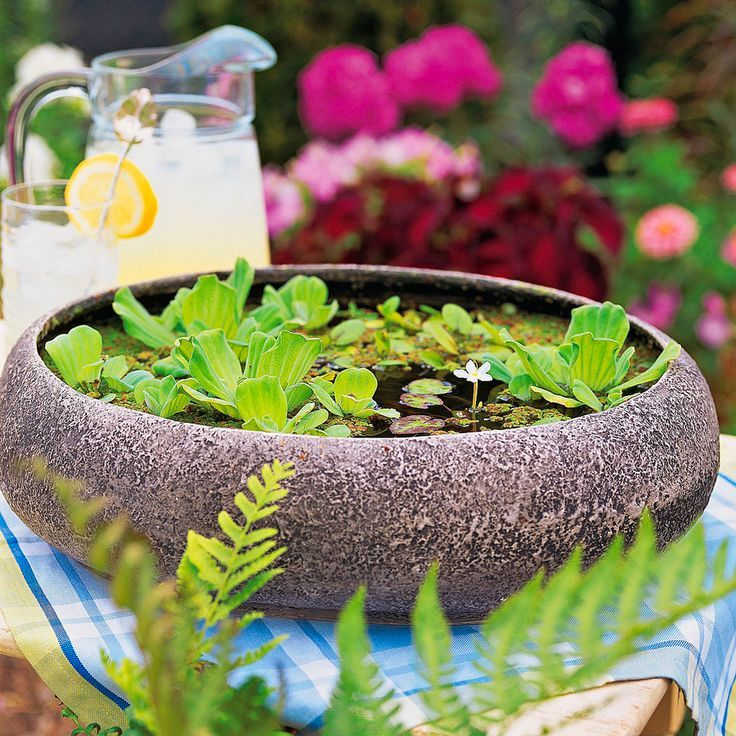 Water Container Garden: 245 Best Images About Container Gardens On Pinterest