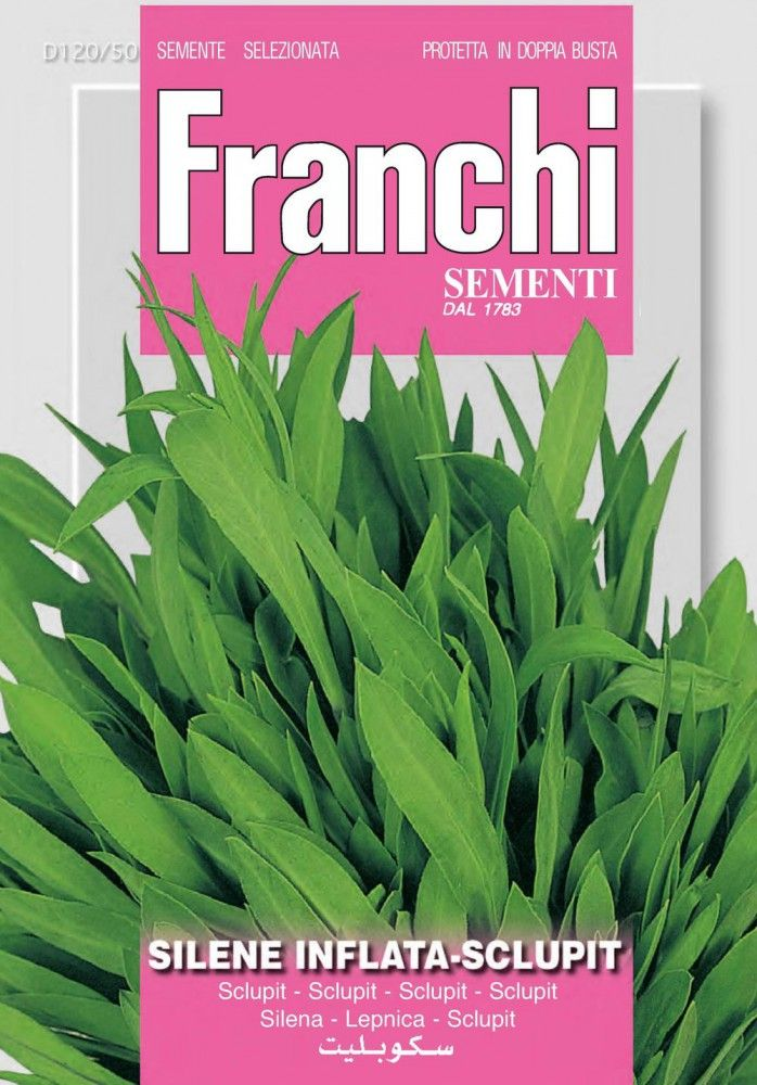 Kräutersamen - Leimkraut Sclupit von Franchi Sementi