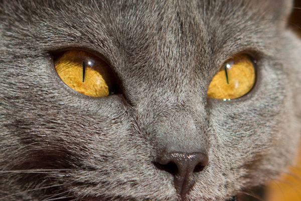 Kartäuser Augen