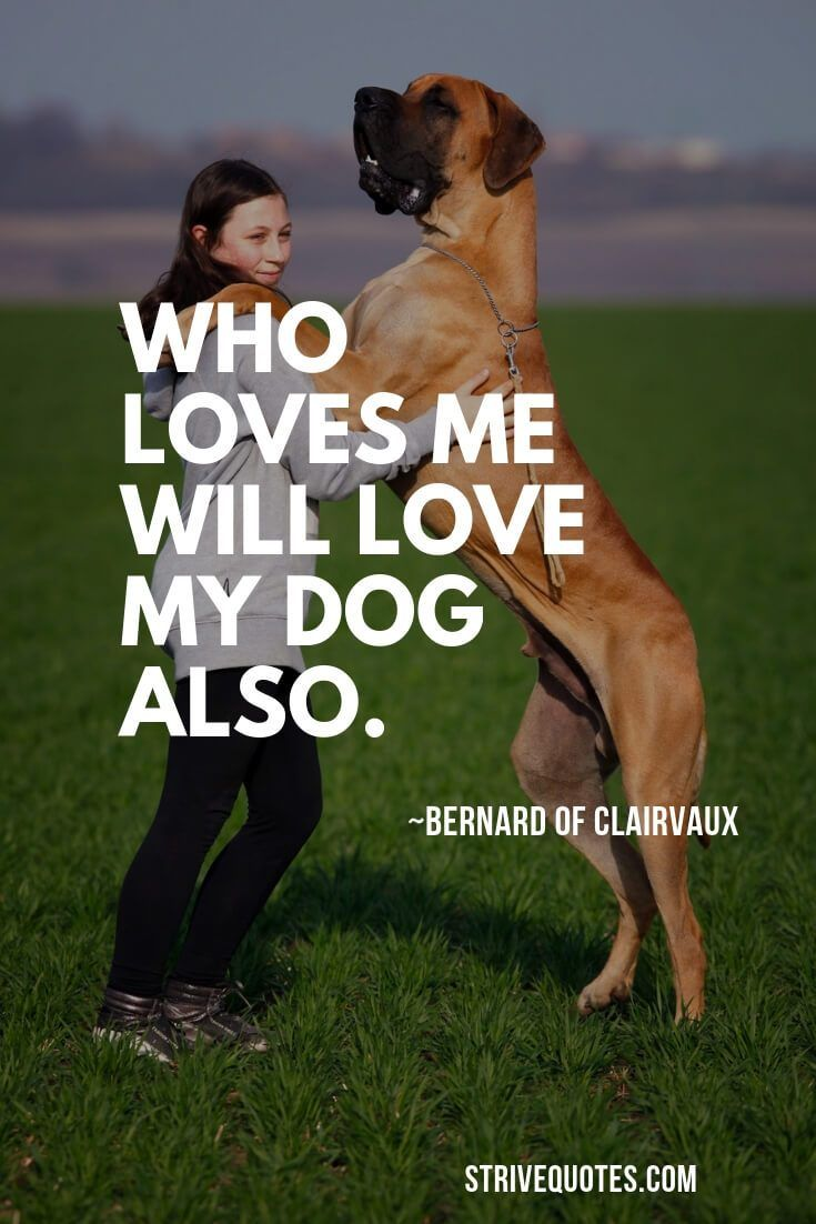 35 Cute I Love My Dog Quotes