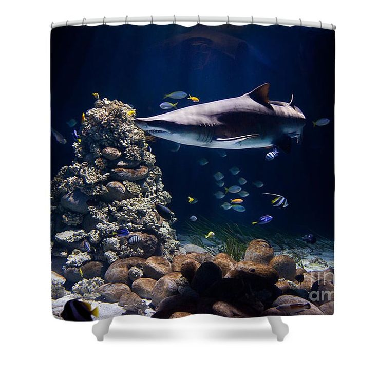 Shark and many small fishes in dark water, sunlight beams with blue tonation. #shower #curtain #product #gift #bathroom #shark #animal #water #darkness #fish #decor
