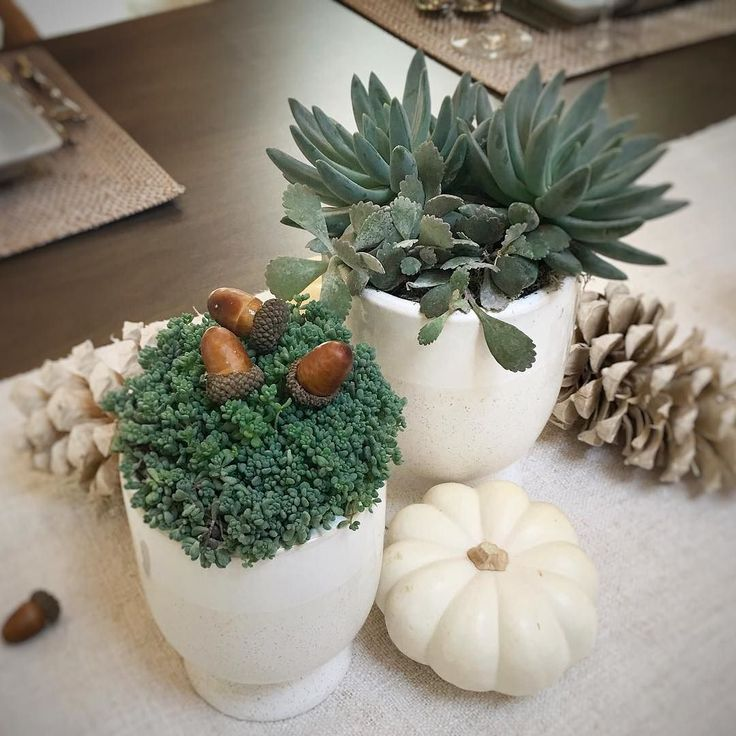 Ive got the pumpkins and acorns to work into my Thanksgiving table decor as inspired by @mollywoodgarden  #simple #transitional #tabletop  #tabletop #tabledecor #placesettings #entertaining #setthetable #tablesetting #tablescape