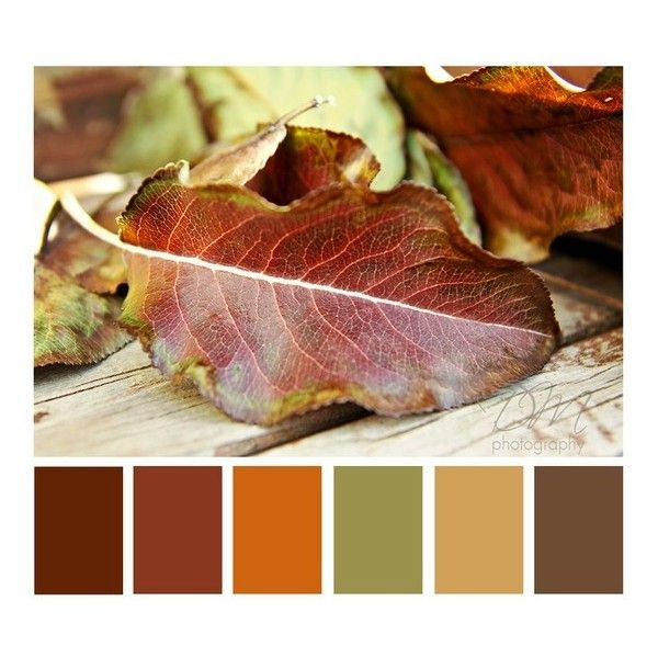 Color Pallets ❤ liked on Polyvore featuring palettes