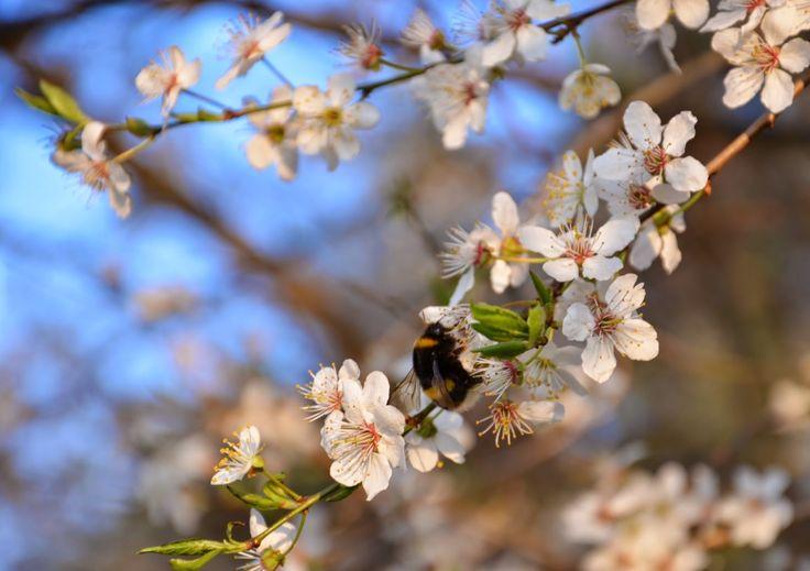 Ach wiosna!