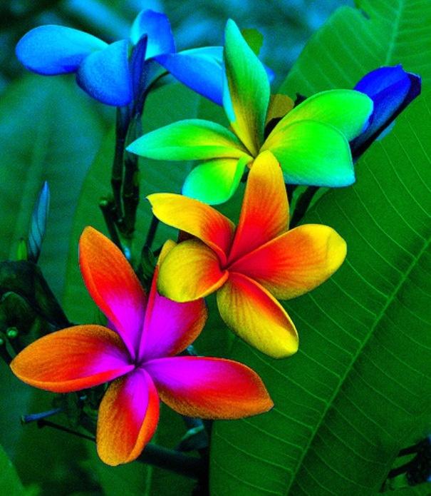 island colors