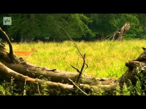 Avara luonto - Villi Pohjola (4/6) Tanska - YouTube