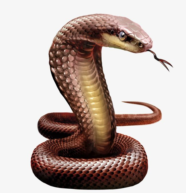Snakes Hydra Poison S Png Transparent Image And Clipart For Free Download Cobra Snake Snake Diamond Painting