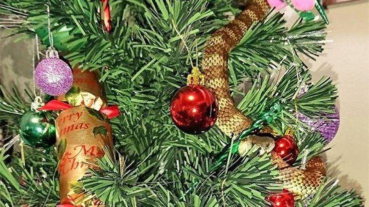 Warga Melbourne Temukan Ular Melingkar di Pohon Natalnya