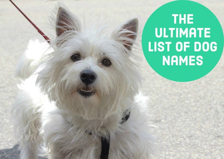 Dog Names Hundreds Of Suggestions By Color Breed Size And Group