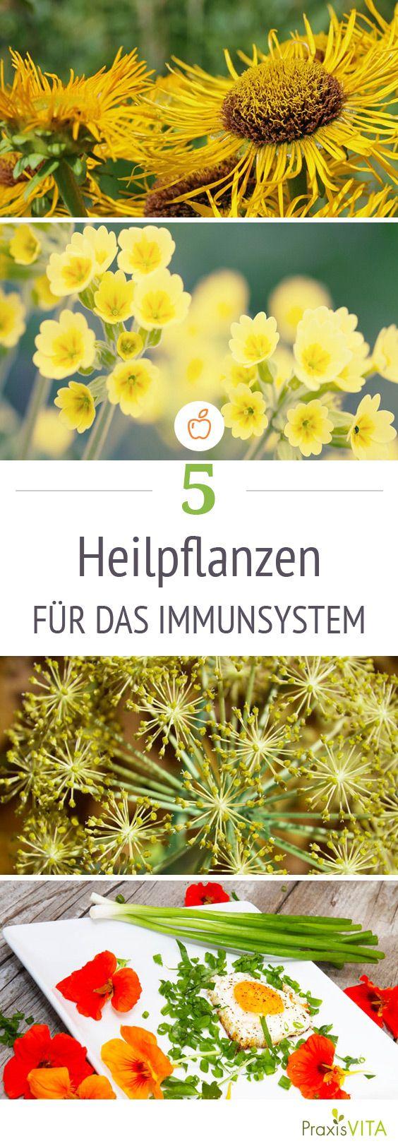 In den unscheinbaren Pflanzen am Wegesrand steckt ein enormes Heilpotenzial mit denen Sie Ihr Immunsystem aufbauen können.