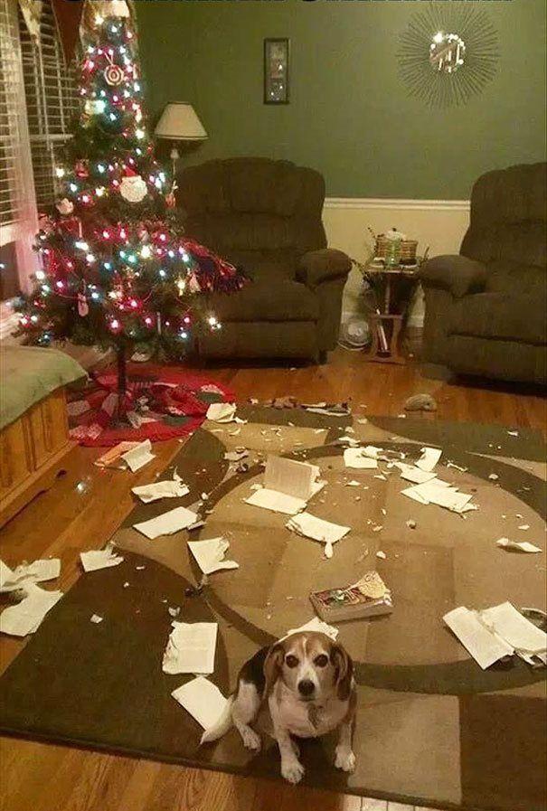20 γάτες και σκύλοι που κατέστρεψαν τα Χριστούγεννα!
