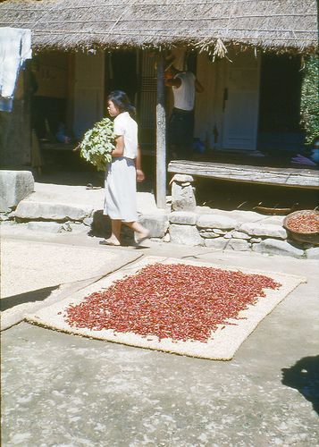 Jeonju:  Drying peppers, circa 1960's